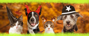TTP-Bootiful Ideas to Make Your Pooch Part of Your Halloween Fun-header-new